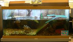 Fish aquariums work great for aquatic pet turtles. This is a setup guide on how to setup the fish aquarium as a turtle habitat.