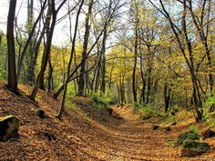 Az ősz útja.