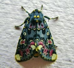moths: color and pattern inspiration