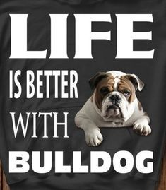 The major breeds of bulldogs are English bulldog, American bulldog, and French bulldog. The bulldog has a broad shoulder which matches with the head. Bulldog Breeds, English Bulldog Puppies, British Bulldog, Mini English Bulldogs, French Bulldog, English Bulldog Funny, Pet Dogs, Dog Cat, Doggies