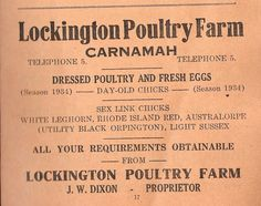 Dressed Poultry and Fresh Eggs - Day-Old Chicks. all your requirements obtainable -- Lockington Poultry Farm, Carnamah Day Old Chicks, Rhode Island Red, Secret Recipe, Poultry, Eggs, Fresh, Recipes, History, Backyard Chickens