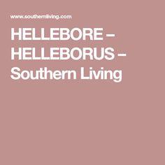 HELLEBORE – HELLEBORUS – Southern Living