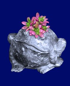 Toad- Swamp Toad Planter