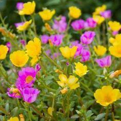 10 καλοκαιρινά λουλούδια που κλέβουν την παράσταση! Garden, Plants, Exotic, Mom, Flowers, Container Gardening, Herbs, Gardens, Silk