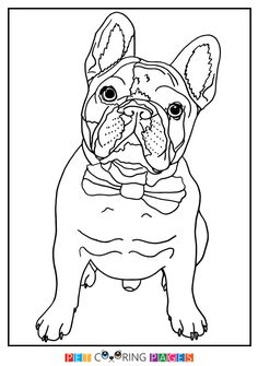 100 free coloring page of a french bulldog puppy color in this