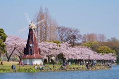 都内の桜巡りの第4弾は都立浮間公園の桜です。 今まで紹介した場所は都内のメジャーなお花見スポットですが、今回は地元のおすすめスポットです。…