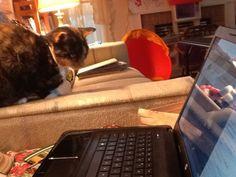 Nana5cats' Candy Cane also checking out Deborah Henson-Conant. http://hipharp.com