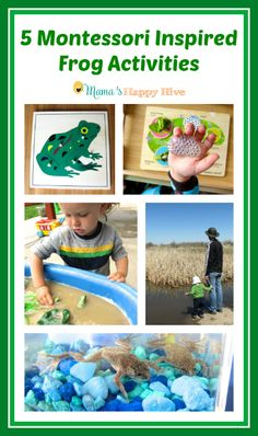 These are 5 fun Montessori Inspired sensory activities for learning about frogs! - www.mamashappyhive.com
