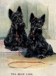 Scottish Terrier Scottie Dog Print Greetings Note Card Two Sitting Dogs Westies, Dog Art, Mans Best Friend, Dogs And Puppies, Doggies, Puppy Love, Animal Pictures, Cute Animals, Scottish Terriers
