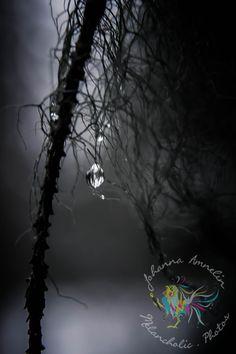 Drops in lichen