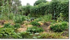 Great post about the creation and establishment of a permaculture garden.