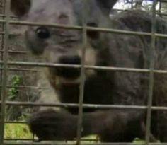 Stanley Roy informa: Familia captura extraño animal en Texas  (Vídeo)