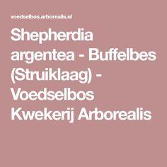 Shepherdia argentea - Buffelbes (Struiklaag)  - Voedselbos Kwekerij Arborealis