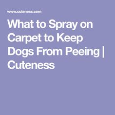 Natural Spray To Keep Dogs From Peeing On Carpet