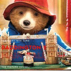 Paddington Bear, Brown Bear, Teddy Bear, Animals, Animales, Animaux, Teddy Bears, Animal, Animais
