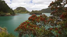 Whangaroa Harbour Water Taxi from Lane Cove Dukes Nose to Totara North or Whangaroa. Water Taxi Shuttle to Kingfish Lodge Fish Farming, New Zealand, Beautiful Homes, Tours, River, How To Plan, Landscape, World, Places