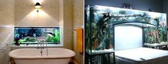 Fish tank in the bathroom!