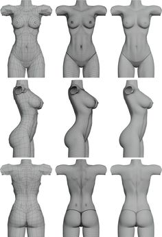 Sub-division female torso.