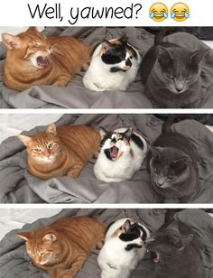 #funny #funnyanimals #cats Visit our website : thepetsarena.com