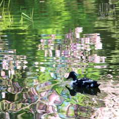 Spring in Vienna's Parks Vienna, Parks, Bird, Spring, Animals, Animais, Animales, Animaux, Birds