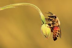 bee - Photography by Necdet Yasar