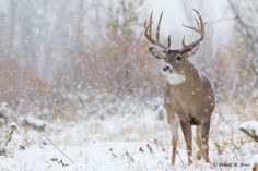 Nothin better then huntin in the snow!