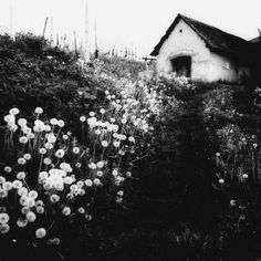 black and white - cottage