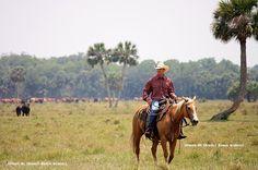 Já visitaram um fazenda de verdade aqui na Flórida? Vocês sabiam que aqui estão algumas das maiores fazendas de gado do mundo? E que só em uma delas há cerca de 50 mil cabeças de gado? É isso mesmo: a Flórida não é só o turismo dos parques ou a correria das compras. Leia este