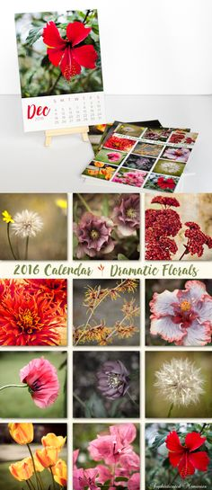 2016 Desk Calendar with Easel - Christmas Gift Idea - Floral Photography Calendar - Mini Gallery Wall - Home Office Decor - 5x7 Calendar