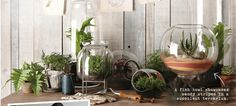 Cactus terrariums - super cute! Maybe for bar in kitchen?