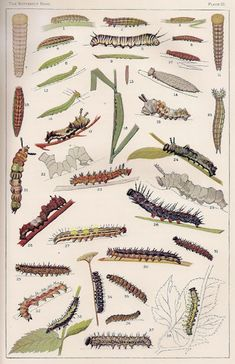 FREE Botanical & Butterfly Printables~  Amazing collection of detailed, antique prints.  Print to share with students, or print on cardstock to add a decorative touch to your classroom, or home.  Fascinating and beautiful!