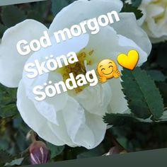 Sköna Söndagen ⛅☀️😊Soligt o blåsigt⛅ Ha en fin söndag 🌸🍃🌸