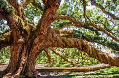 Treaty Oak Park - Jacksonville Fl