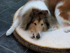 Homemade Canine Kidney Diet