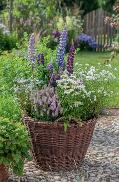 Natural bloom: summer flowers for the country house garden For a summer, the wicker basket becomes a perennial border for lupins, honorary award (Veronica spicata 'Inspire Pink'),. Container Flowers, Container Plants, Container Gardening, Amazing Gardens, Beautiful Gardens, Beautiful Flowers, Cottage Garden Design, Flower Aesthetic, Plantation