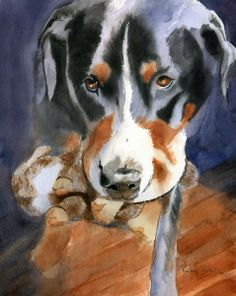 Love this watercolor of a Swissy with her rabbit toy... so sweet