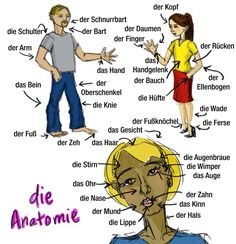 Very detailed body parts. Unfortunately, I don't know the source. Foreign Language Teaching, German Language Learning, Learning Spanish, German Grammar, German Words, German English, Learn English, German Resources, Deutsch Language