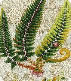fern print  Fecund Fern