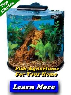 10 Gallon Fish Tank Starter Kit Woodworking Projects Plans