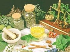 O poder das plantas - O Programa Nacional de Plantas Medicinais e Fitoterápicos do Ministério da Saúde divulgou uma lista com 71 plantas que possuem propriedades de cura.  Veja...