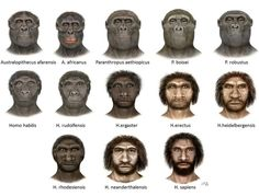 Human evolution as depicted in faces. However skin color in H. erectus and H. heidelbergensis is speculative. Certainly H. erectus was black when emigration out of Africa began.