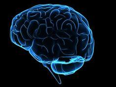 Como armazenar informações na memória no longo prazo?  Nosso cérebro é um imenso e complexo computador. Na coordenação da sua memória, o hipocampo tem um papel fundamental.  O hipocampo (pequena estrutura bipartida localizada no centro do cérebro) é quem autoriza o registro duradouro das informações no seu cérebro. Mas quais informações geralmente são guardadas por muitos e muitos anos?     Pesquisas indicam que duas situações influenciam o crivo do hipocampo:  » a informação terá registro…