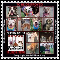 11 DOGS ON 08/31/17 KILL LIST- ELEVEN TO BE MURDERED-NYC- SAVE THEM-FOSTER-ADOPT-RE-PIN HELP SAVE LIVES!!!
