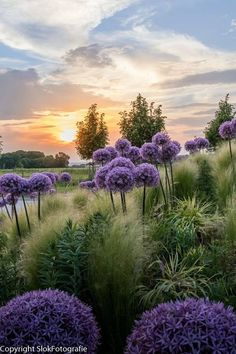 Beautiful Nature By Rini Slok Alliums. Beautiful Nature By Rini Slok Alliums. The post Beautiful Nature By Rini Slok Alliums. appeared first on Fotografie. Mountain Photography, Landscape Photography, Nature Photography, Beautiful World, Beautiful Places, Beautiful Pictures, Dream Garden, Nature Pictures, Amazing Nature
