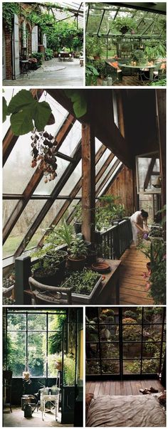 The plants and the windows with the natural wood compliment each other so well, my heart is fluttering.