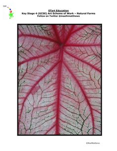 NEW GCSE Art Specification Resource. Natural Forms Scheme and supporting materials