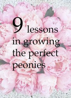 We asked the Chair of the Peony Society to share her no-nonsense tips for how to grow the perfect, blousy peonies - including how to plant them, care for them and how to help them look their best once they've been cut and arranged in a vase.