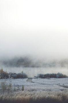 Nature Image: fog