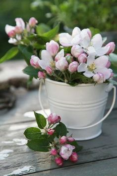 Apple Blossom Road