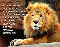 Leão Da Tribo De Judá Leão Pinterest God Bible E Lion